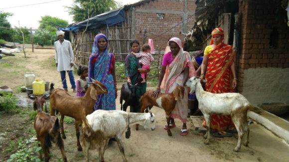 A group of four women stand outside with their goats in India